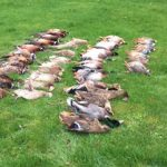 game birds from hunting trip